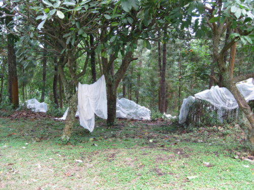 mosquito nets must be aired before use
