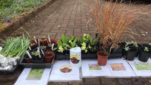 fundraising plant sale